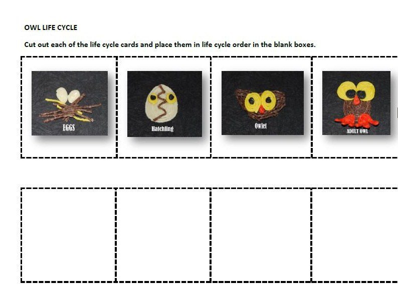 Owl Life Cycle Sequencing Cards